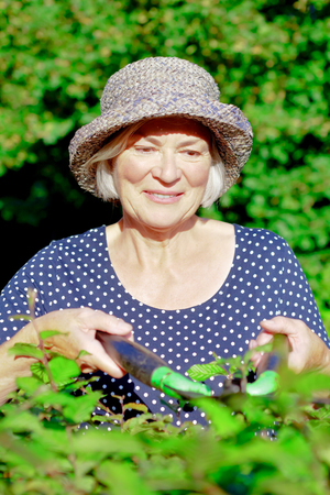 Smiling senior woman with a straw hat trimming the hedge of her garden yard on a sunny summers day, joy of gardening concept