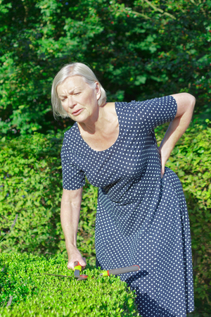 Senior woman in her garden yard cutting a boxwood hedge, holding her back because of a sudden intense backache or lumbago