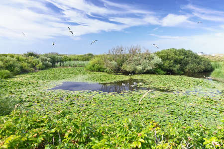 Pond with seagulls on the dune of Helgoland, or Heligoland, a german island in the North Sea, in summer. 免版税图像