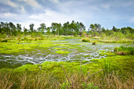 The peat bog Pietzmoor in the nature reserve Lueneburger Heide in northern Germany.