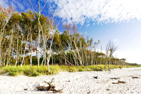 The natural and empty beach Weststrand on the west coast of the Fischland-Darss-Zingst peninsula in Germany