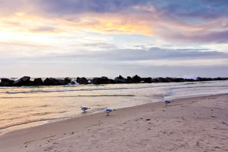 Three seagulls during sunset on the seashore of Wustrow on the Fischland-Darss-Zingst peninsula, Germany.