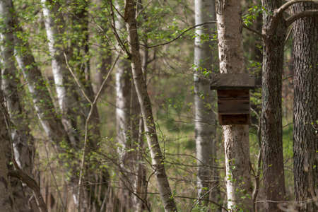 maison oiseau: Maison de l'Oiseau Birch