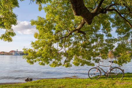 amortization: Bicycle stands under a tree by the lake