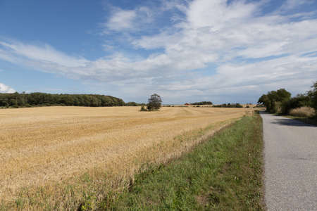 stubble field: Stubble field with trees on a small street