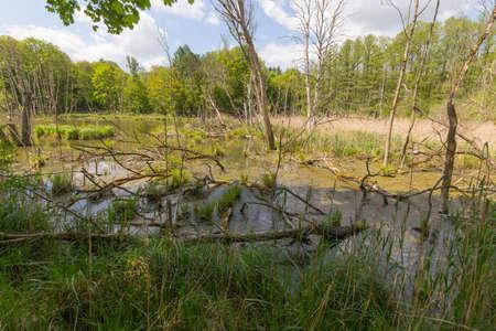 arboles secos: �rboles volcados y muertos en un estanque al lado de la carretera