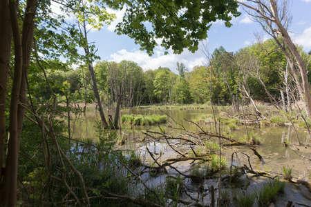 arboles secos: Árboles volcados y muertos en un estanque al lado de la carretera