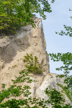 scarp: Rough limestone rocks with bushes and trees on Mons Klint Denmark