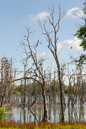 bleak: Bleak trees that serve as a basis for many cormorant nests Stock Photo