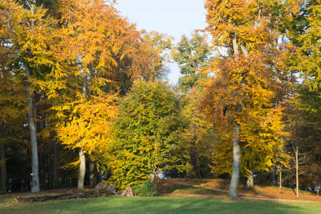 discolored: Yellow-brown discolored leaves in a forest with hills Stock Photo