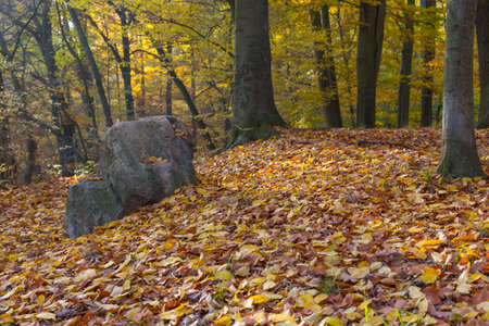 discolored: Large stone in the forest of a park autumnal discolored