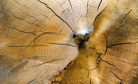 crannied: Close view of the crannied log from the end.
