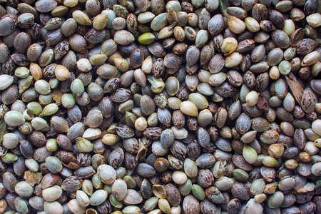 대마 씨앗 배경의보기 닫기 스톡 콘텐츠