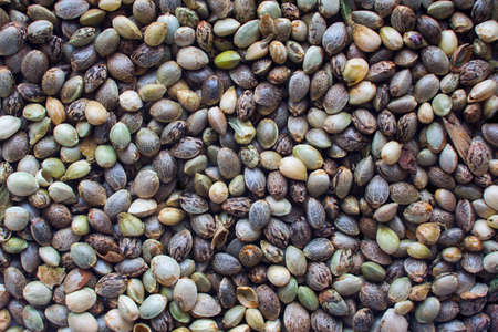 Close view of a hemp seeds background Imagens