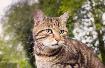 Portrait of a tabby cat in a blurred trees background