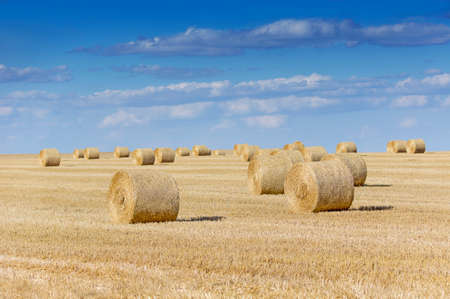 Straw bales on farmland with blue cloudy sky in august