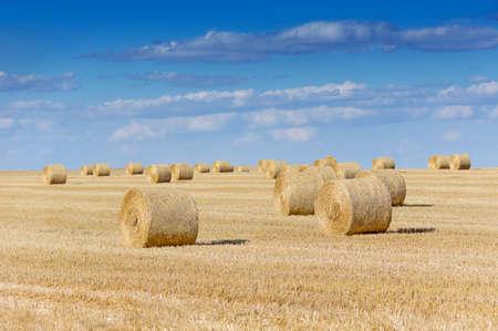 Strobalen op landbouwgrond met blauwe bewolkte hemel in augustus