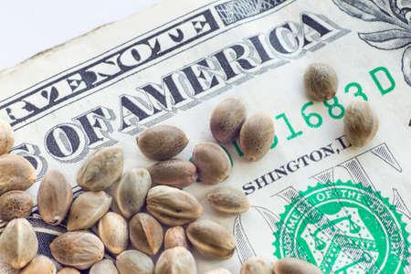 Een dollar biljet en hennep zaden erop op een witte achtergrond