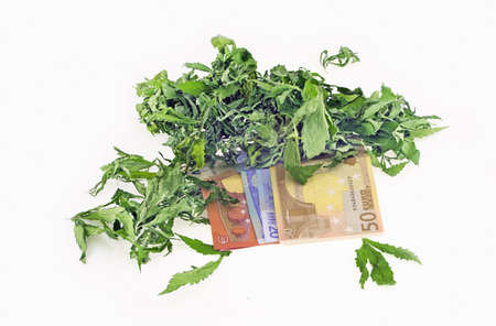 cash crop: Dried hemp leaves on euro banknotes in a white background