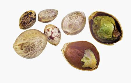semilla: Las semillas de cáñamo aislados en un fondo blanco