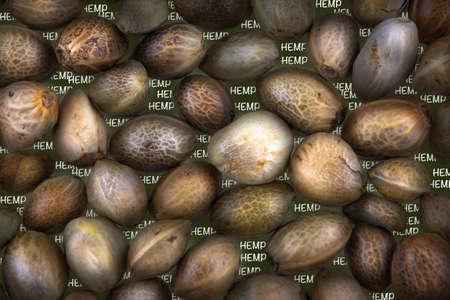 Hennep zaden op een groene achtergrond met witte tekst HENNEP Stockfoto