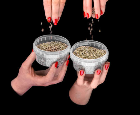 four hands: Four  hands with hemp seeds in plastic containers on a black background