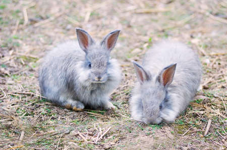 pelage: THE ANGORA RABBIT IS A VARIETY OF DOMESTIC RABBIT BRED FOR ITS LONG, SOFT WOOL.