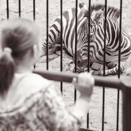 zoo youth: Girl near a cage with zebra in zoo in black white Stock Photo