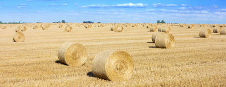 Rolls of hay in a field, this is typical view at harvest time