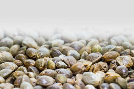 Hemp seeds. Close up. Space for text. Stock Photo