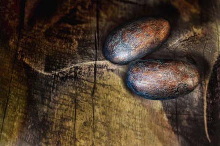 Two Criollo raw cacao beans on an old wooden background.  Close up, macro.  스톡 콘텐츠