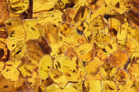 Backgound of amber pieces with insects inclusions. Close up.