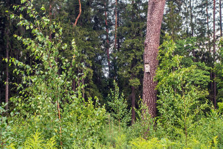 Nesting-box on the pine tree in a forest in summer.