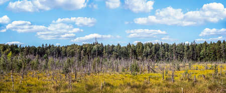 Panoramic view of Dubrava Reserve Area near Kaunas city on sunny day. Lithuania.
