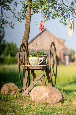 Vintage rusty grass shredding machine with flower pot and basket in a farm in sunrise time.