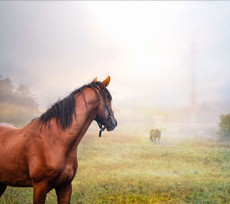 Two horses on an autumn grass in foggy morning. Imagens