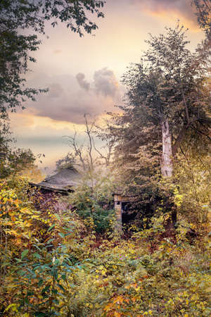 Old ruined wooden building in a natural forest on  autumn evening.