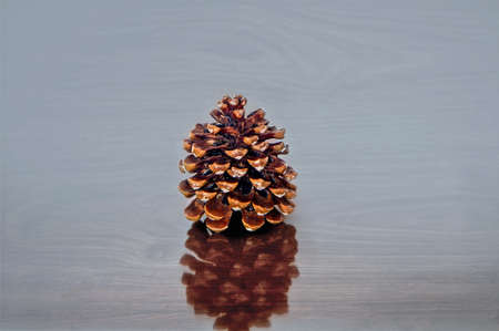 Pine tree cone on a table. Close up.