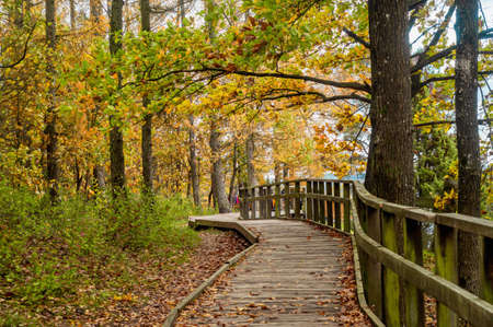 Wooden walkway in Juniper Valley in autumn. Lithuania.