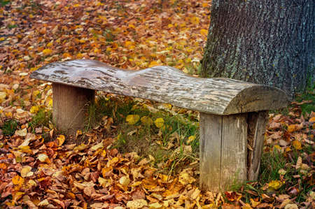 Old wooden bench in an autumn park with colorful leaves. Close view.