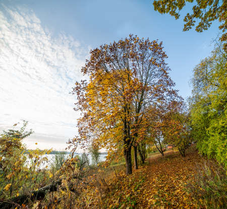 Beautiful autumn landscape near water body in the morning. Lithuania.