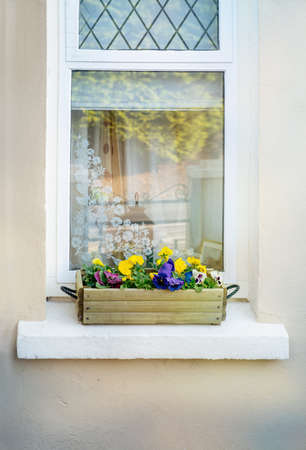 Viola flowers in wooden flowerpot on a white window sill. Close view. Stok Fotoğraf