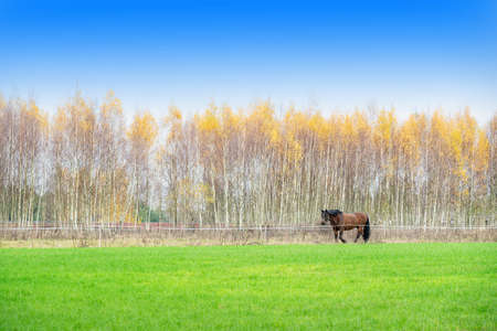 The Žemaitukas in autumn, a historic horse breed from Lithuania. It may be classified as a pony, due to its relatively short stature (between 131–141 centimeters at the withers)