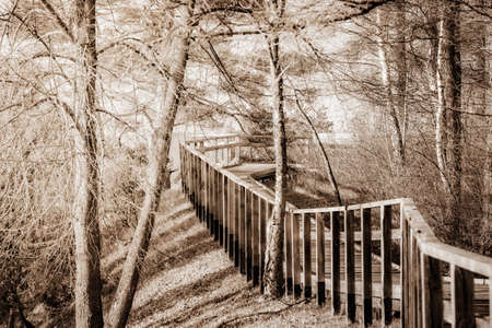 Wooden walkway in Juniper Valley in autumn. Lithuania. Sepia.