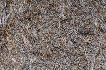Hay in a bale on sunny spring day. Close up. For background.
