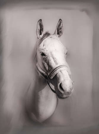 Beautiful portrait of horse with bridle. Black white. 免版税图像
