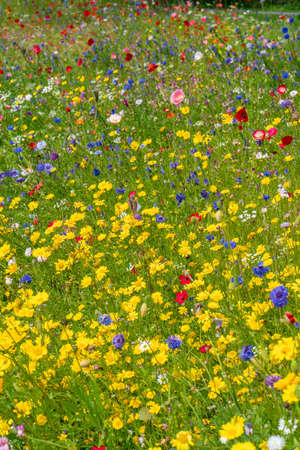 Various wild flowers bloosoms in the meadow on summer