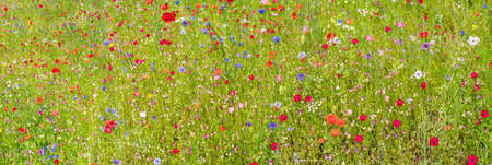 Colorful various wild flowers in the meadow in summer