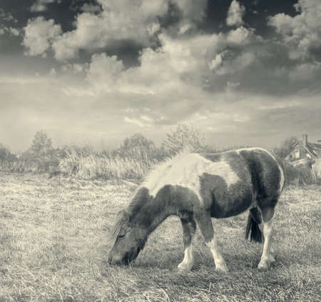 Pony horse on the grass in autumn. Sepia.