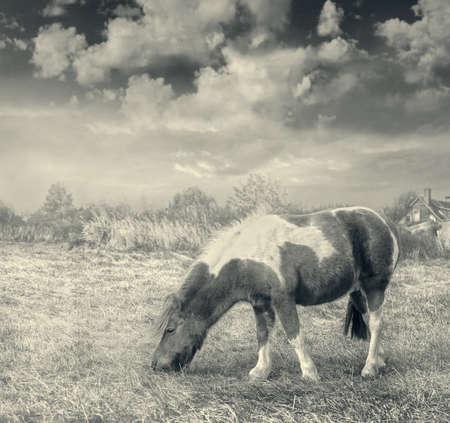 Pony horse on the grass in autumn. Sepia. 免版税图像